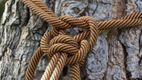 Жінка виховувала чужу дитину, прив'язавши мотузкою до дерева біля кладовища