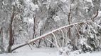 Ужасные последствия непогоды: лесники Черкасской области до сих пор ликвидируют последствия