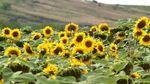 Українські аграрії просять СОТ заблокувати новий закон України