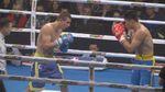 """Бокс. """"Українські отамани"""" готуються до останнього туру WSB"""