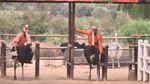 З'явилась нова розвага — катання на страусах