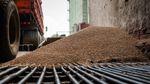Россия массово вывозит из Крыма хлеб
