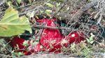 В результате шторма в Одессе погибла женщина