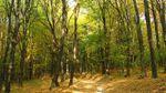 У сина Пшонки відібрали 15 тисяч гектарів лісу
