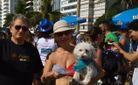 """В Рио-де-Жанейро стартует """"Собачий карнавал"""""""
