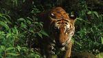В Таиланде нашли популяцию редких животных