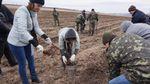 На месте ожесточенных боев в зоне АТО высадили дубовую рощу