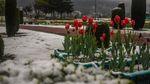Прогноз погоди на 18 квітня: сніг і холод