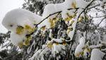 Україна опинилась між двома циклонами