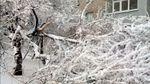 Хуртовина лютує у Харкові: повалено понад півсотні дерев