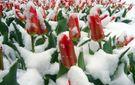 Прогноз погоди на 21 квітня: де вируватимуть негода та холод