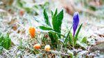 Синоптик попередила про суттєве похолодання: сунуть заморозки та навіть сніг