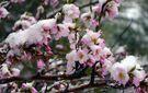 Аномальна весна: Україну продовжить морозити