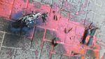 """Во львовской """"Свободе"""" заявяють о нападении на их офис: фото"""