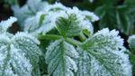 Агрометеоролог розповіла, якої шкоди завдали Україні травневі заморозки