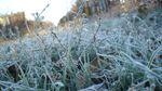 Харківські науковці розповіли, як уберегти врожай від заморозків та холоду