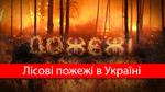 Яких збитків завдали Україні лісові пожежі за рік: вражаючі цифри