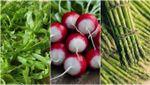 3 сезонні продукти, які варто їсти в червні