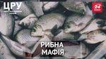 Як чиновники, правоохоронці та екологи прикривають рибну мафію, – розслідування ЦРУ. Частина 2