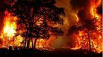 Появились новые детали масштабных пожаров в Португалии