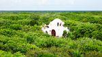 У Мексиці побудували казковий готель на дереві посеред джунглів: з'явились фото