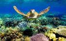 Великий бар'єрний риф оцінили у неймовірну суму