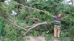 Буревій на Чернівеччині: поламано дерева та позривало дахи будинків