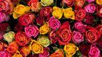 В старинном замке Сент-Миклош устроили фестиваль роз