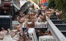Тисячі курей заблокували автобан в Австрії: тварини випали з вантажівки