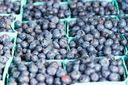 Черника: ягода, которая помогает похудеть
