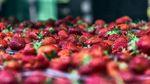 Будете удивлены: ученые назвали самые опасные фрукты и овощи