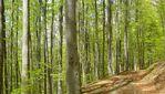 Карпатские буковые леса получили статус Всемирного наследия ЮНЕСКО