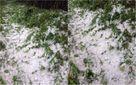 Наче снігом: Прикарпаття рясно засипало градом