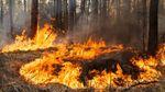 Херсонщина потерпає від масштабних лісових пожеж