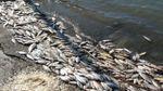 В Житомире массово гибнет рыба