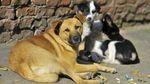 На Черкащині відкрили унікальну пересувну клініку для тварин