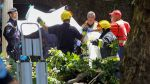От падения дерева 13 человек погибли в Португалии