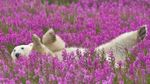 У Норвегії гід заплатить кругленьку суму за те, що налякав ведмедя