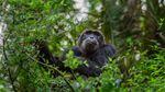 Мавпи стають мутантами через вплив пестицидів: жахливі висновки вчених