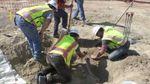 В США строители случайно нашли динозавра: потрясающее видео