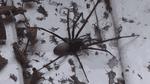 Паук-гигант напугал фермера: пугающие фото и видео