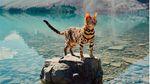 Кішка, яка дуже багато подорожує: мальовничі фото