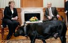 """Авторитенте немецкое издание прокомментировало конфуз с Путиным-""""собакой"""""""