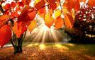 Прогноз погоди на 15 вересня: в Україні буде по-літньому тепло