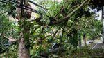 Ураган в Румынии унес 8 жизней и надвигается на Украину