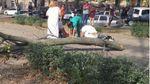 Негода у Дніпрі: в центрі міста дерево вбило дівчину
