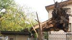 Вражаючі наслідки урагану на Західній Україні