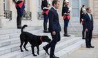 Пес Макрона змусив господаря червоніти на зустрічі з міністрами: курйозне відео
