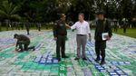 У Колумбії вилучили найбільшу в історії країни партію кокаїну