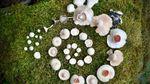 Девушка из Финляндии создает впечатляющие композиции из грибов в лесу: яркие фото